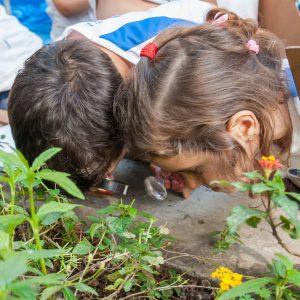 De Pouquinho Em Pouquinho, Podemos Salvar A Natureza!